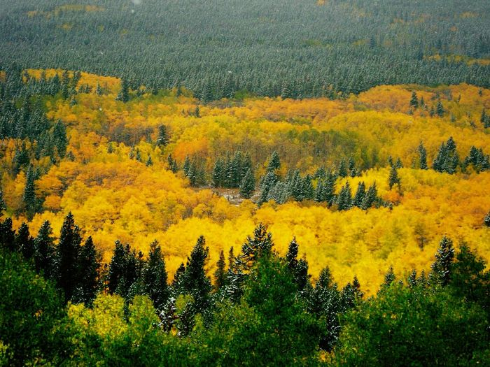 Fall in Colorado nature Outdoor Photography Aspen Trees Fall Road Trip Mountain View . dusting of snow First Mountain Snow Landscapes With WhiteWall Motus Natura