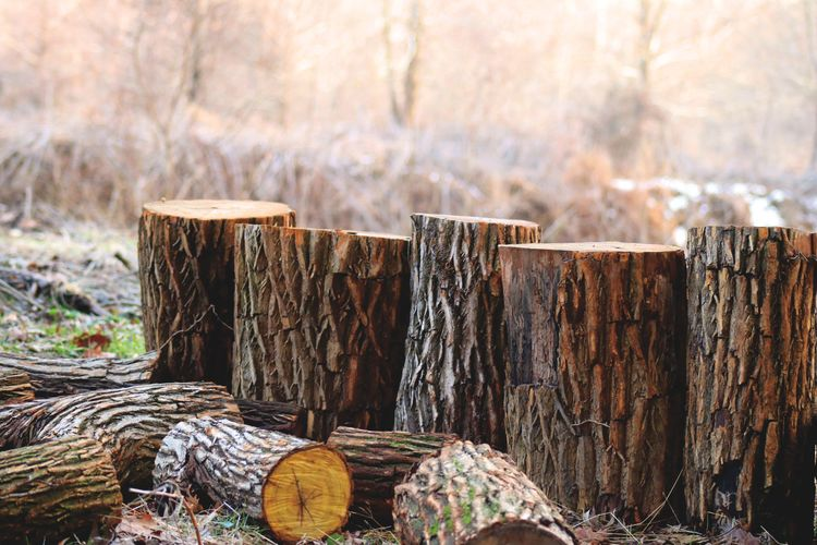 Wooden Logs On Field In Forest
