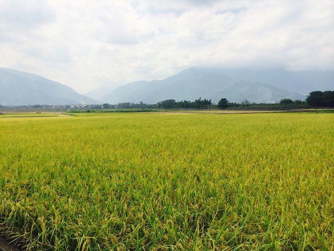 Taiwan Taitung Greenplants EyeEm
