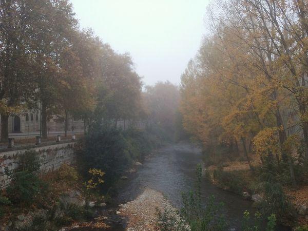 Fog Burgos