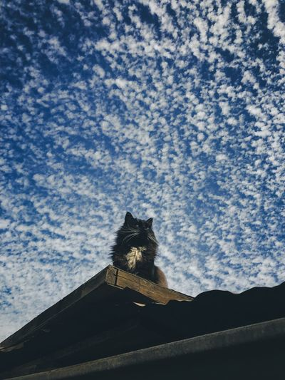Low angle view of cat sitting against sky