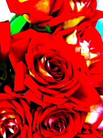 Eye Em Best Shots - Nature Flowerporn Flower Collection Loving Flowers