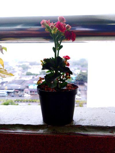Flower Window Indoors  Vase Window Sill Home Interior No People