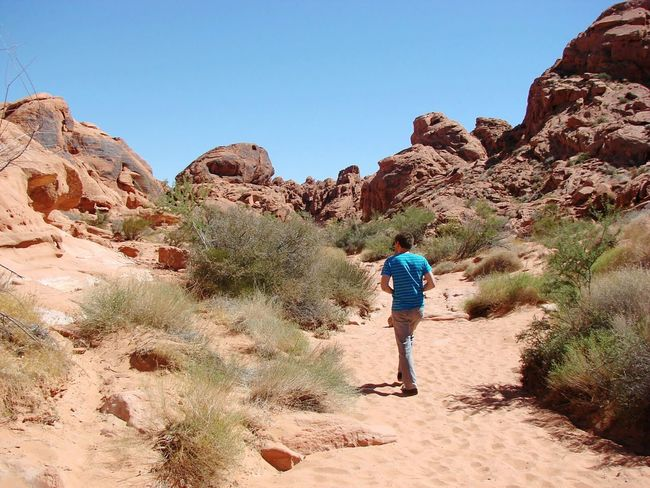 One Person Full Length Hiking People Males  Outdoors Nature Sand Adventure Cactus Day Sand Dune Rear View Walking Around Desert Desert Landscape Miles Away