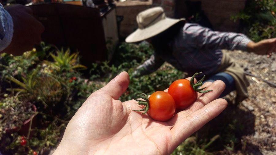 TOMATO Gastronomy Garden Photography Foodeyeem