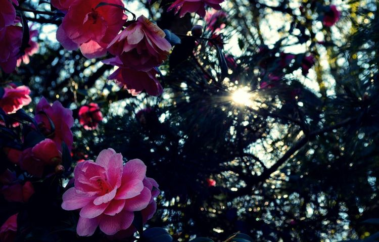 Last days of Pink. Pantone Colors By GIZMON Flowerporn EyeEm Nature Lover