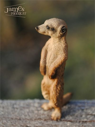 James The Meerkat Meerkat Schleich Figure Nature Eye4photography  Cute Taking Photos Macro_collection Streamzoofamily