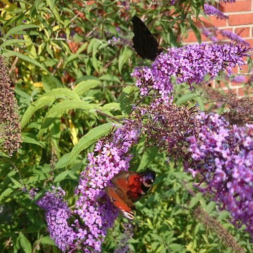 Butterflies Beuty Of Nature