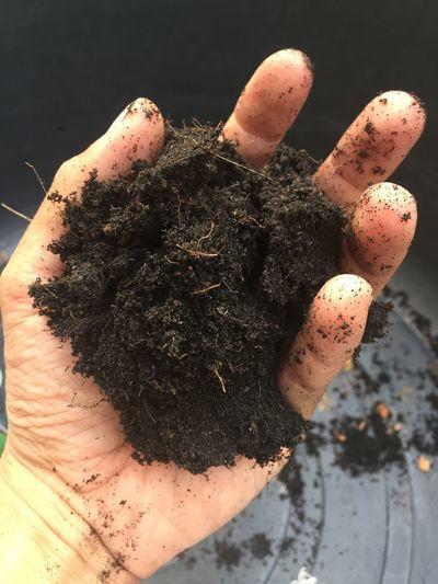 Pot Soil Nature