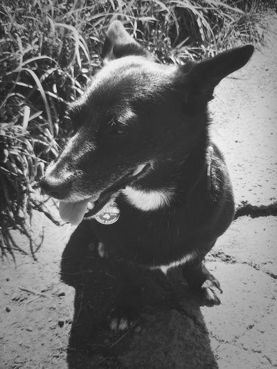 I Love My Dog Makemoments Momenttele Black & White
