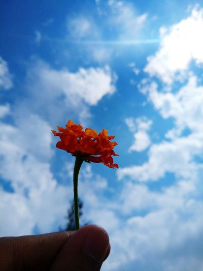 Will You Marry Me? I Love You. <3 Yes Yes All Mine ! Nature Small Nature I Need Your Love I Need You Flower Head Do You See What I See? Beauty Nature Flower Blue Sky Cloud - Sky Beauty In Nature Hahahaha 😂😂😂😂😂 Just Taking Pictures Naturelovers Close-up Day Look At This Sky!