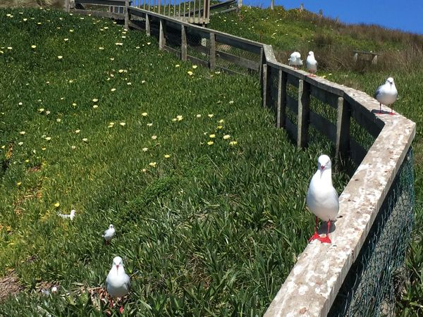 Seagulls chillen in the sun on a wood. Bird Animal Themes Grass Animals In The Wild No People Animal Wildlife Nature Perching Outdoors Day One Animal Beauty In Nature