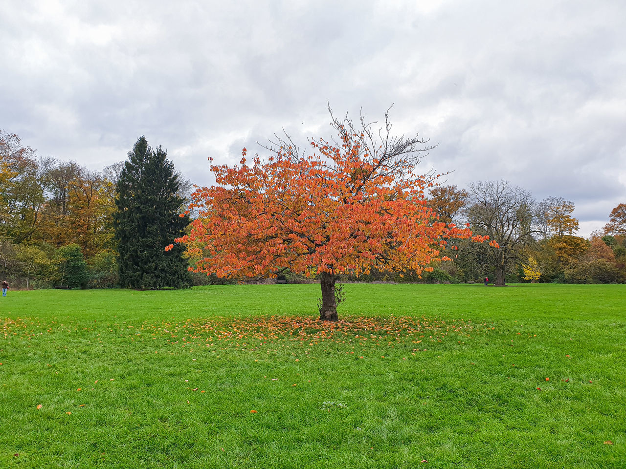 AUTUMN TREES ON FIELD AGAINST SKY