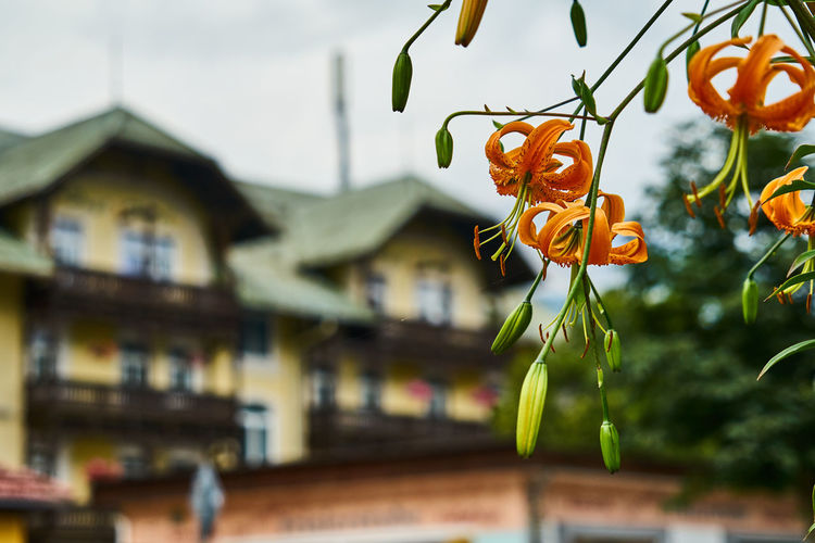 Close-up of white flowers against building