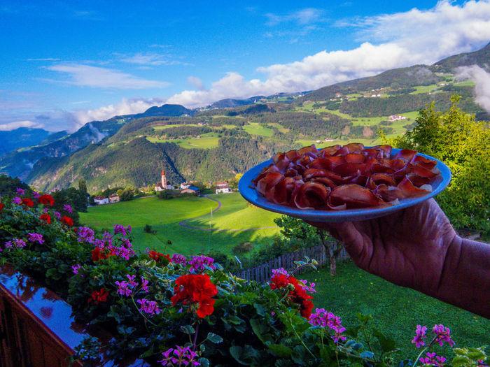 Scenic view of flowering plants against mountain range