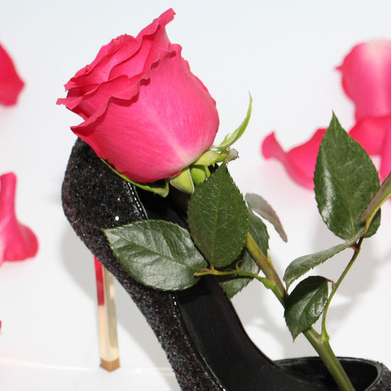 99cbef433a6 Pink rose in a female shoe. Black shoes with high heels. Rose next to