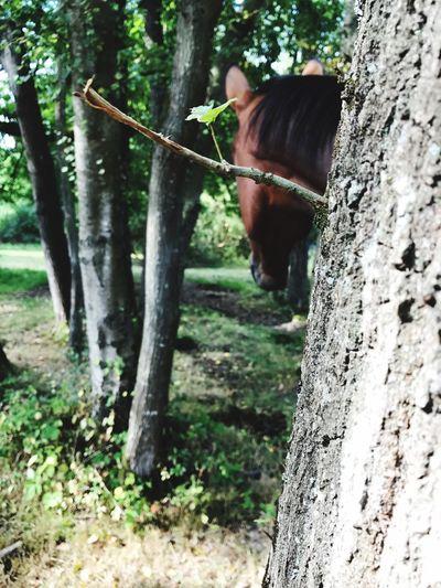 Animal Themes One Animal Horse Nature