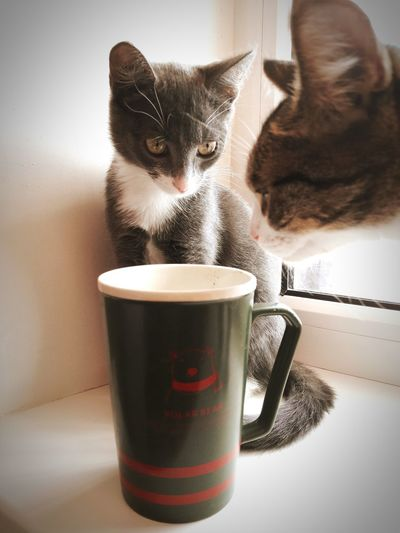 It seems they liked my coffee Cats Kitten Animal Themes Cup Of Coffee Two Is Better Than One
