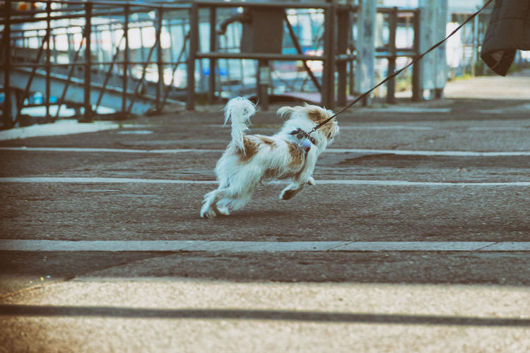 Rear View Of Dog Running