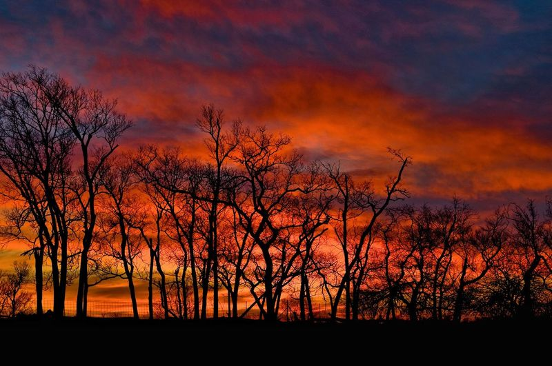 Silhouette bare trees in forest against orange sky