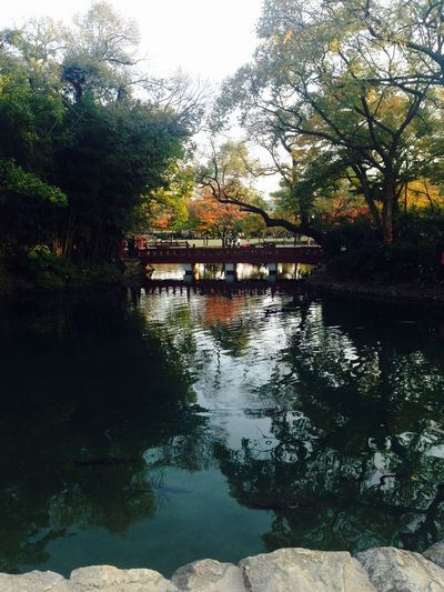 my favorite picture ? Korean Palace Gwanghallu Namwon Garden Fall Waterscape Landscape