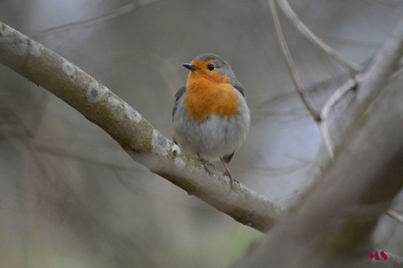 55mm 300mm Beauty In Nature Bird Themes Close-up European Robin Evening Time Week End Walk With My Nikon D3200