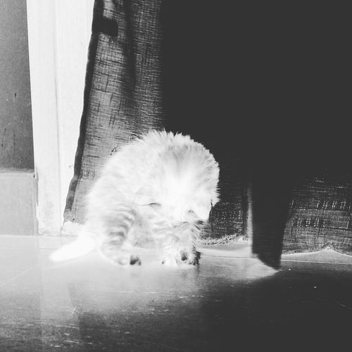 EyeEmbestshots Eye4photography  EyeEm Gallery EyeEm Best Edits EyeEmBestPics Shinning Bright Shinning Cat♡ Cat Lovers Animals Illuminist Nature Pets Catlovers Taking Photos Negative Effect Check This Out Cute Pets Cute Cats EyeEm Best Shots Cat Eye4black&white  Blackandwhite Black And White Black & White