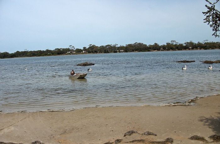 Coles Bay Animal Themes Beach Beauty In Nature Bird Day Lake Nature Nautical Vessel No People Outdoors Scenics Sky Swan Swimming Tree Water