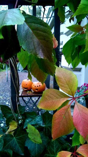 Pumpkinsonadate Halloween Happyhalloween Halloween Pumpkins