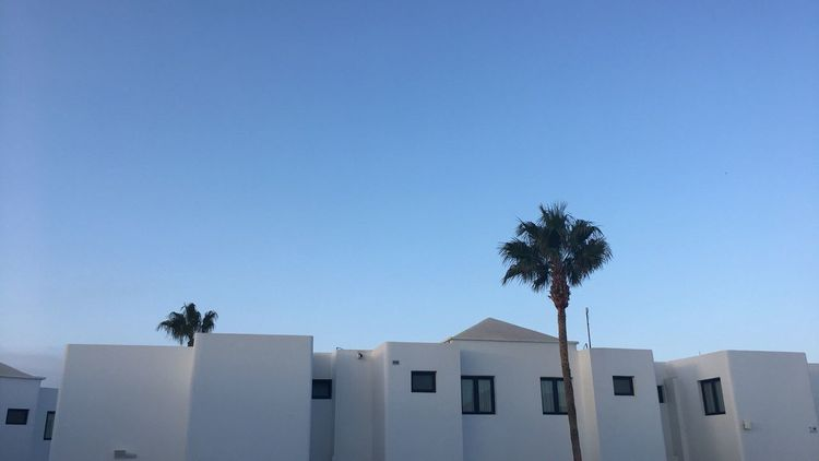 Palm Tree Architecture Built Structure Building Exterior Clear Sky Copy Space Blue Low Angle View Day Outdoors Whitewashed No People Tree Sky Nature