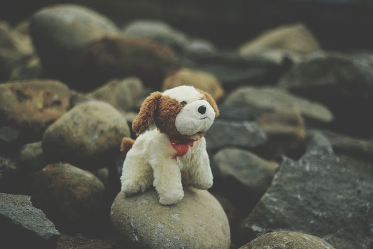 High Angle View Of Dog Stuffed Toy On Rock At Field