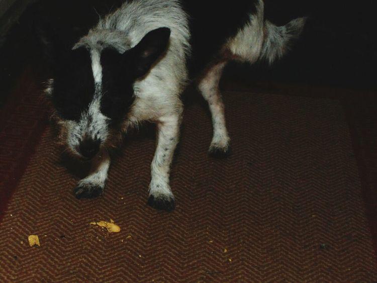 My Dog Aking Photos ❤ Nikon D80 And EYEemEditing Doggy Crunching. :-D