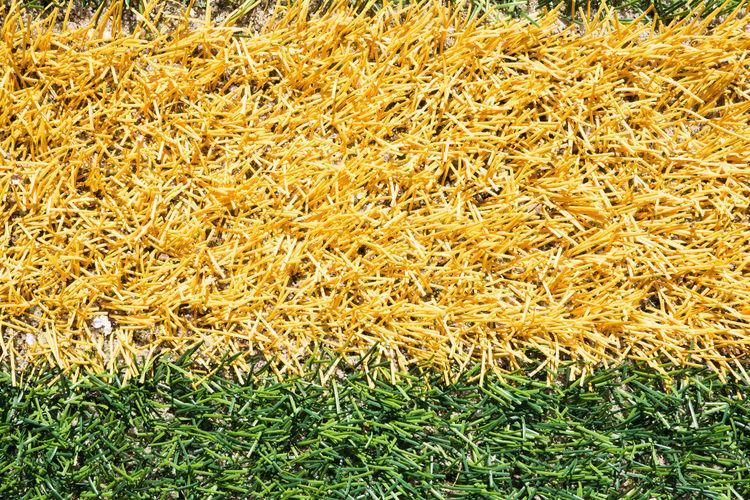 Full frame shot of fresh yellow grass