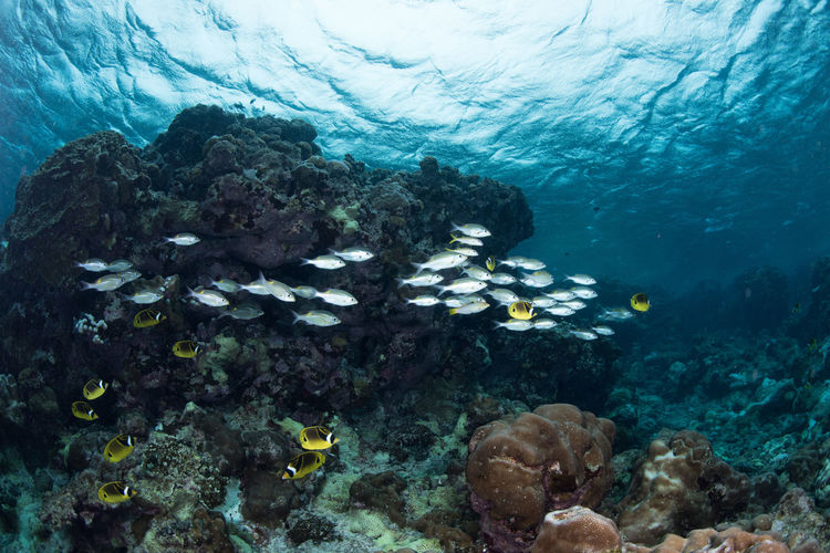Clear blue views of Rota Island in the Northern Mariana Islands Animal Animal Themes Animal Wildlife Animals In The Wild Coral Ecosystem  Fish Group Of Animals Invertebrate Large Group Of Animals Marine Nature No People Outdoors School Of Fish Sea Sea Life Swimming UnderSea Underwater Vertebrate Water