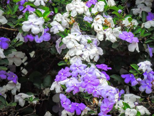 Flowers,Plants & Garden Flowers_collection Beauty In Nature flower#garden#nature#ecuador#santodomingoecuador#eyeEmfollowers#iphoneonly#nofiltrer#macro_garden#pretty#beautifulfollowmesho flower#garden#nature#ecuador#santodLove In Nature omingoecuador#eyeEmfollowers#iphoneonly#nofiltrer#macro_garden#pretty#beautifulfollowmesho flower#garden#nature#ecuador#santodomingoecuador#eyeEmfollowers#iphoneonlynofiltrermacro_gardenprettybeautifulfollowmesho Tranquil Scene Flowers :)