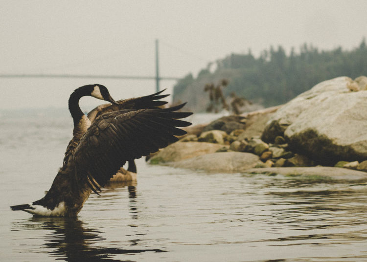 Wildlife Photography Wildlife & Nature Wildlife Bird Photography Vancouver Canadian Outdoors Travel Photography Canada Nature Ocean Oceanside Rocky Coastline Coastal Walk Ocean Waves Coastal Feature North America Landscape Ocean And Rock Forest Park Urban Landscape Bird The Week On EyeEm