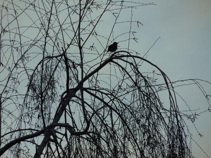Bare Tree Bird