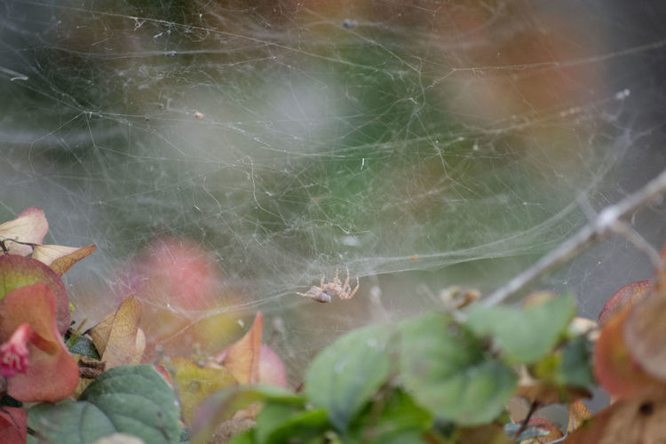 Close-up of spider web on leaves