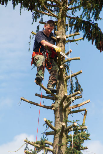 Low angle view of man working on tree against sky