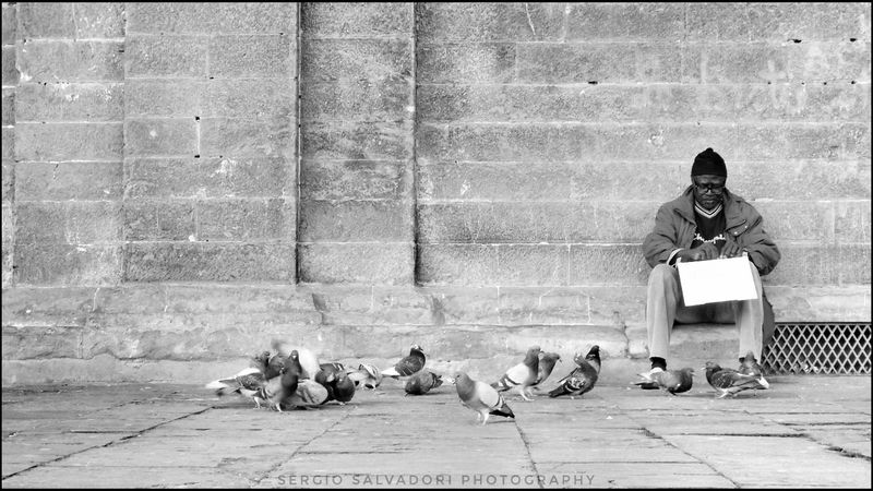 Man Firenze Igers_firenze Blackandwhite Nikon Streetphotography Italy Tuscany Instagood Myself People Fotografia Bird Real People People Outdoors Day Adult One Person Animal Themes City
