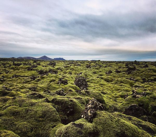 Love these moss covered Lava fields in Iceland . Beauty In Nature Sky Nature Scenics Tranquil Scene Tranquility Landscape Cloud - Sky Idyllic Green Color Outdoors Eye4photography  Travel Destinations EyeEm Nature Lover Countryside Moss Moss-covered Sky And Clouds Eye4photography  Hiking Nature Photography No People Mountain Landscapes Miles Away