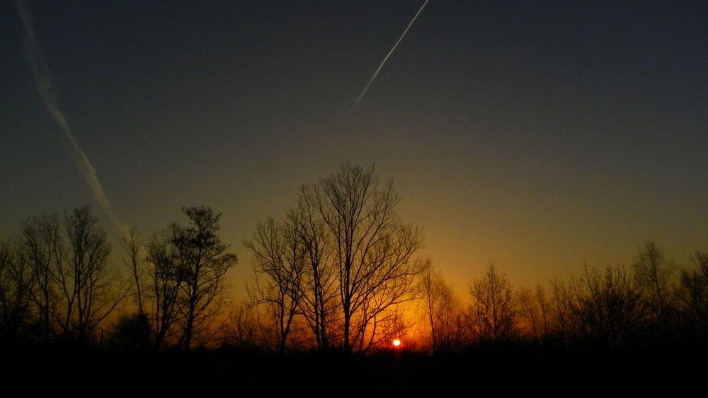 Nature Beauty In Nature No People Sky Landscape Sunrise Today Wschódsłońca Poland Polska Podkarpacie Trees And Sky Trees Sun Słońce Natura Kodak Kodak Easyshare Scenics Kodak Z981 Nofilter No Retouch Bez Retuszu