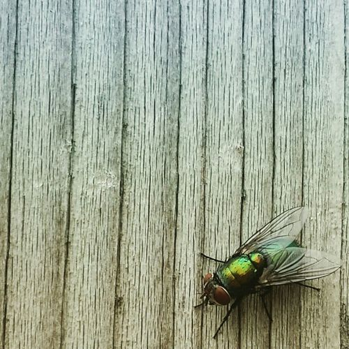 Fly Insects  Insect Photography Insect_perfection Insects Collection Insect_addicts EyeEm Nature Lover Nature EyeEm Best Shots - Nature Nature Photography