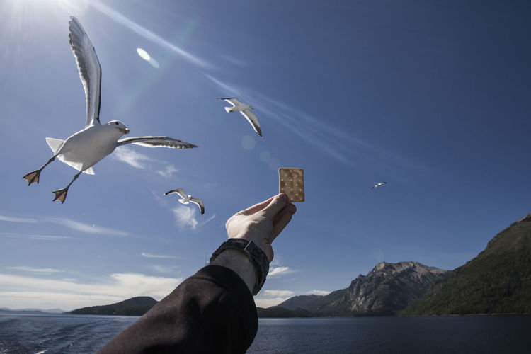 Cropped hand holding biscuit for seagulls against sky