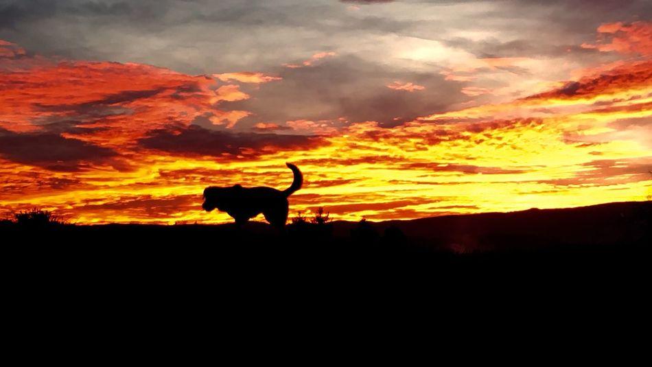 MeMyself&I Andthedog Sundown Skyisburning Alone In Nature