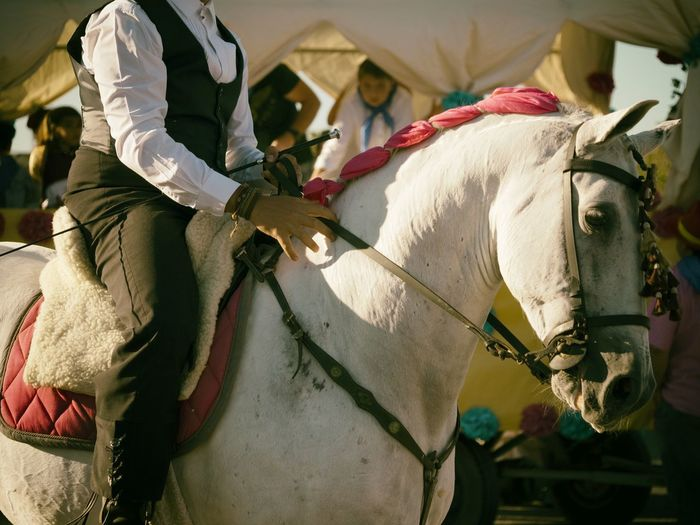 Midsection of man riding white horse