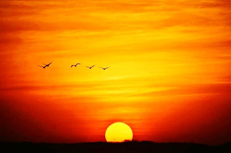 Flying Sunset Silhouette Airplane Air Vehicle Travel Sky Journey Transportation Mid-air Travel Destinations Bird Nature Outdoors No People Aerospace Industry Airshow Fighter Plane Beauty In Nature Commercial Airplane EyeEm LOST IN London Neon Life EyeEm Selects EyeEmNewHere