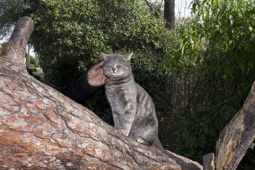 www.instagram.com/hrudography Animal Themes Cat Close-up Day Domestic Animals Domestic Cat Feline Hand Mammal Nature One Animal Outdoors Pets Sitting Tree