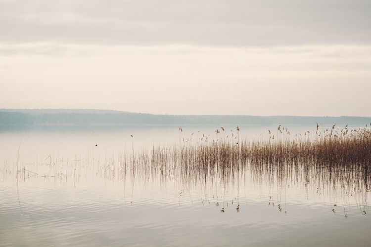 Grass Animal Themes Animals In The Wild Beauty In Nature Bird Calm Water Day Floating On Water Grass Lake Nature No People Outdoors Reed Reed - Grass Family Reeds Reflection Reflections In The Water Scenics Sky Swimming Tranquil Scene Tranquility Water