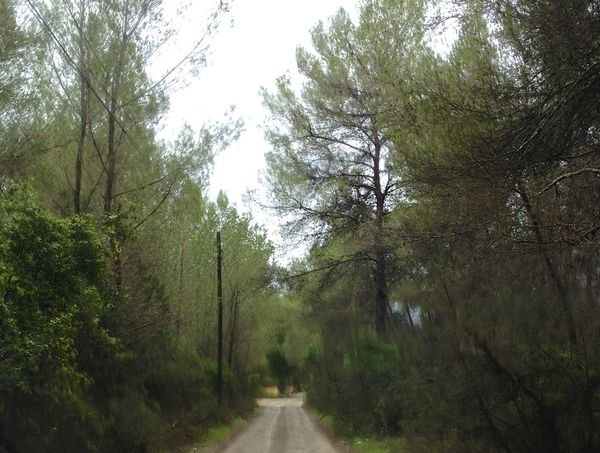 Campo Camino Pine Trees Trippy Energy Movement Winter Green Ibiza